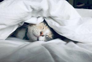 Lectura ayuda a dormir